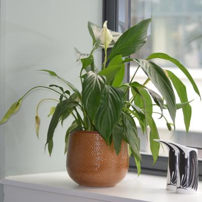 cabinet-plante